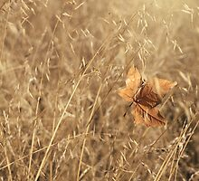 Hold Me Tenderly by Laurie Search