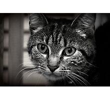 Little kitten Photographic Print