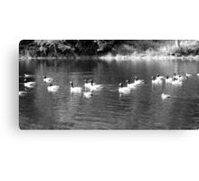 B&W Ducks and Geese Canvas Print