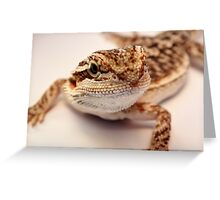 baby bearded dragon Greeting Card