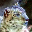 Snow Leopard by vigor