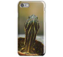 An inquistive terrapin iPhone Case/Skin