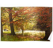 Wonderful Autumn Colours Poster