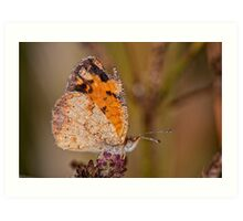 Dew Drenched Pearl Crescent Butterfly Art Print