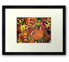 Autumn puddle Framed Print