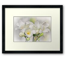 Couple of Freesias... Framed Print