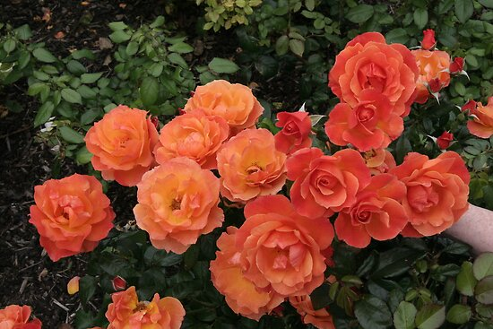 orange by Donna/Lars Tovander