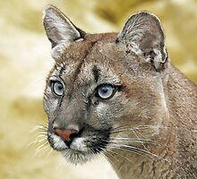 Puma by Mark Hughes