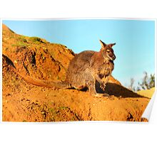 The Wallaby Poster