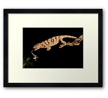 Catching lunch Framed Print