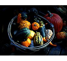 Gourds & Pumpkin Photographic Print