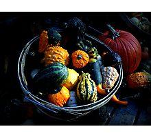 Gourds & Pumpkin Photographic Print