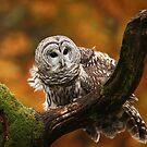 Barred Owl ~ by Renee Blake