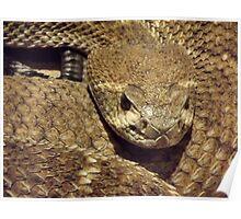 feeling snakey?  Poster