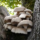 Oyster Mushroom Cluster by Jess Meacham
