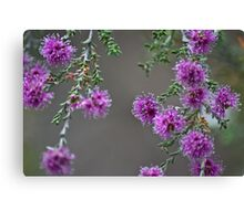 Conimbla Wildflower Canvas Print