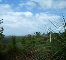 grass tree lookout by GrowingWild