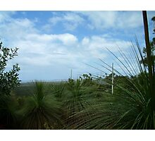 grass tree lookout Photographic Print