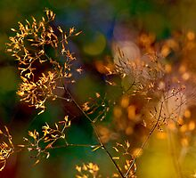 Morning Glitter by Keld Bach