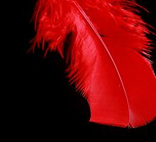 red feather by lensbaby