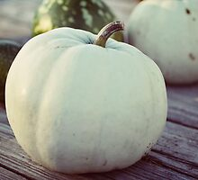 white pumpkin by beverlylefevre