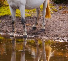 Equine Reflections Sticker