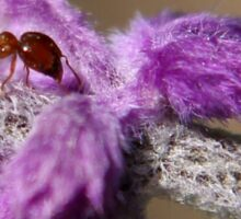 The Ant and it's Purple Comforter...  Sticker