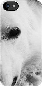 White German Shepherd by Alan Harman