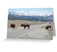 Three Bison Greeting Card