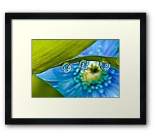 Dew Drop Flower View Framed Print