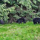 Three Black Bear Cubs by AnnDixon