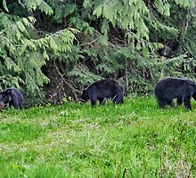 Three Black Bear Cubs by AnnDixon