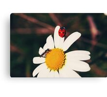 Ladybugs and daisies 2 - Byåsen, Trondheim Canvas Print