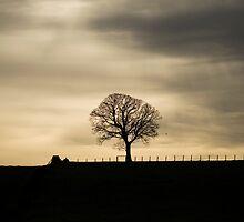 Allander winter tree by Ian Mac