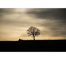 Allander winter tree Photographic Print
