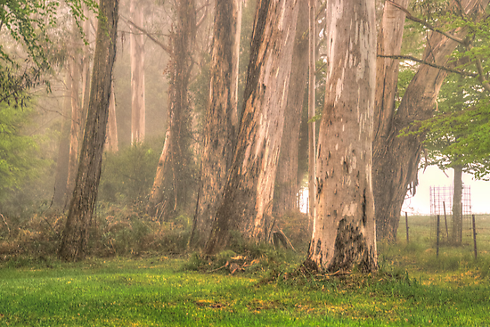 Giants In The Mist - Mount Wilson, NSW Australia - The HDR Experience by Philip Johnson