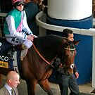 Frankel goes onto the course.  by lulu kyriacou