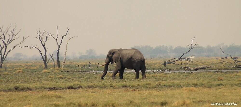 Marsh Elephant by Donald  Mavor