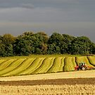 Making Hay While the Sun Shines by RoystonVasey