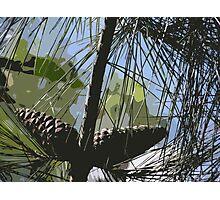 Pine Cone  Photographic Print