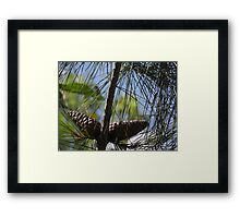 Pine Cone Oilpaint Effect Framed Print