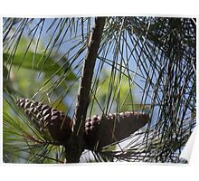 Pine Cone Oilpaint Effect Poster