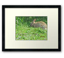 rabbit!!!! Framed Print