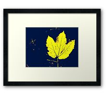 Yellow Leaf With Blue Background Framed Print