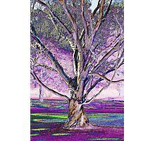 Tollymore Tree Photographic Print