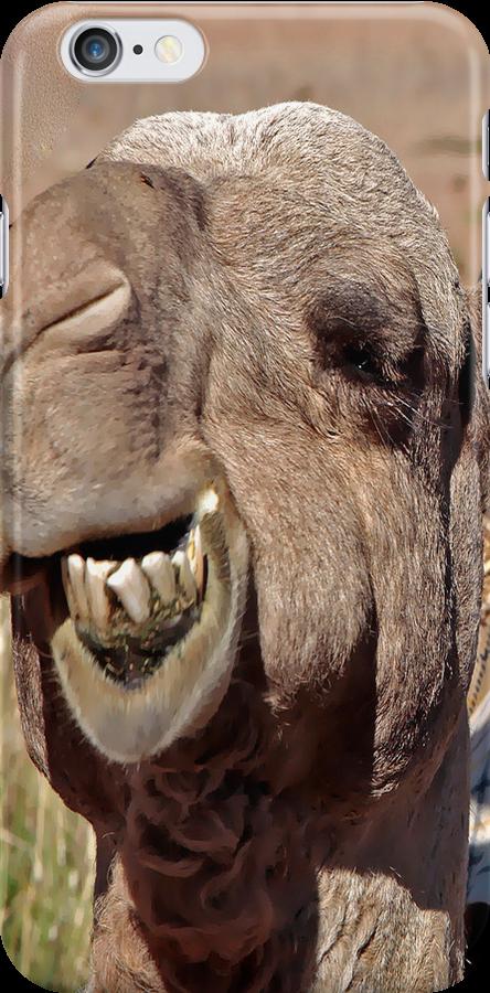Camel by James mcinnes
