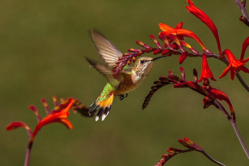 PRETTY AMONG FLOWERS by Sandy Stewart