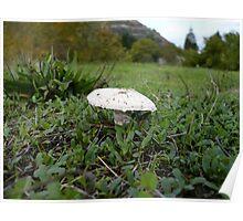 Meadow Mushroom Poster