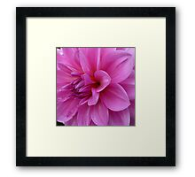 Petals (available in ipad cases) Framed Print