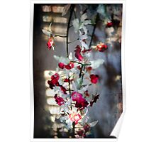 Orchid with diffused light Poster
